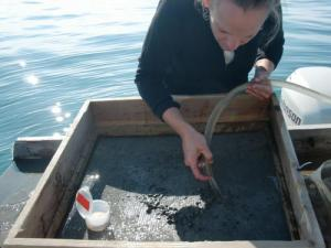 Tara sieving a grab sample to collect invertebrates.