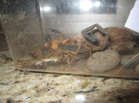 "The lab's pet scorpion nicknamed ""Carrie 2"""