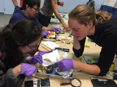 Claire Montgomerey leads an eider egg dissection