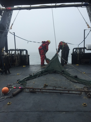 The crew bringing in the trawl net