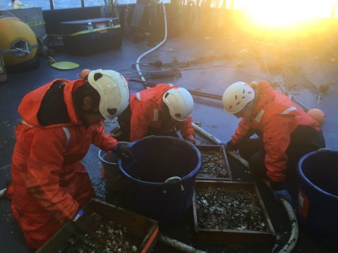 Sorting the catch with the crews help
