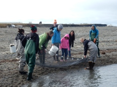 Looking for critters in the seine net